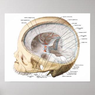 The Brain in the Skull Poster