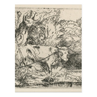 The Bull by Rembrandt Postcard