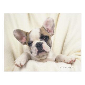 The Bulldog, often called the English Bulldog, 2 Postcard