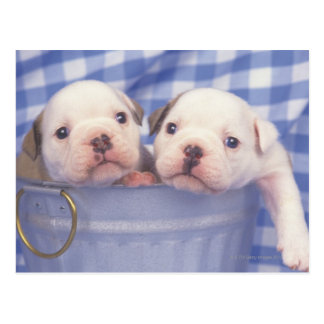 The Bulldog, often called the English Bulldog, Postcard