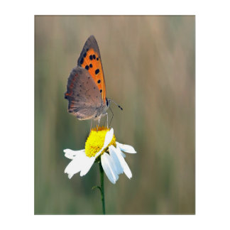 the butterfly image acrylic print