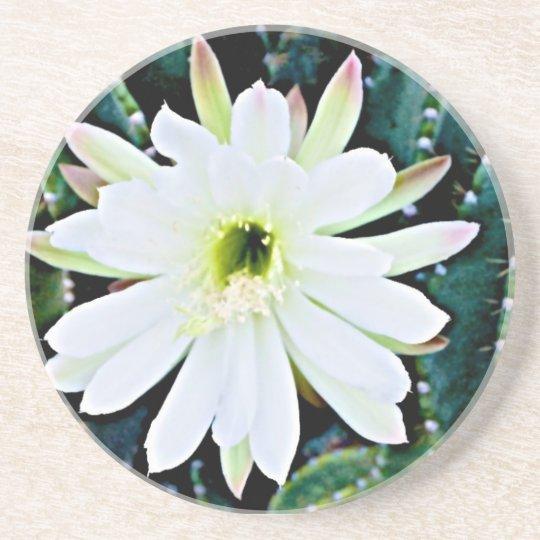 The Cactus Coaster