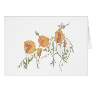 "The California Poppy 5"" x 7"" card, with envelope Card"