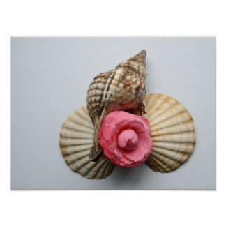 The Camellia And The Shells Poster