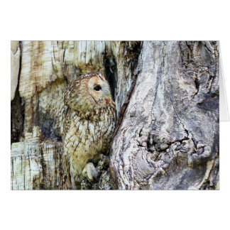 The Camouflage Owl Card