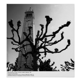 The Campanile from Plaza, UC Berkeley, 1964 Poster