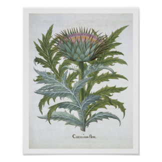 The Cardoon, from the 'Hortus Eystettensis' by Bas Poster