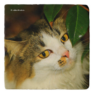 The Cat and the Camellia Trivet