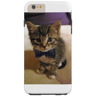 The cat case