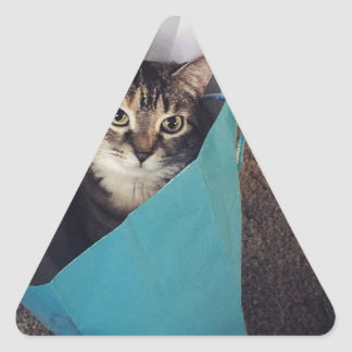 The cat is ready to come out of the bag triangle sticker