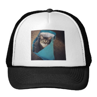 The cat is ready to come out of the bag trucker hat