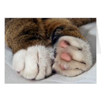 The cat's paws Greeting Card