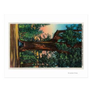 The Chandelier Tree, Underwood Park Postcard