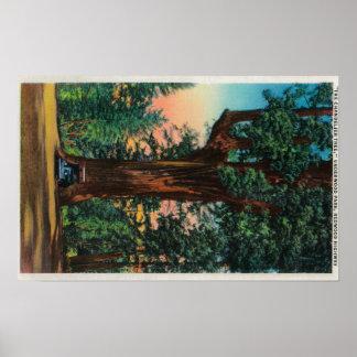 The Chandelier Tree, Underwood Park Print