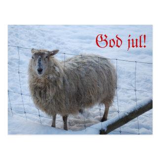 The Christma card sheep feather Postcard