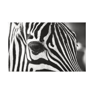 The Close-up. Zebra. Canvas Print