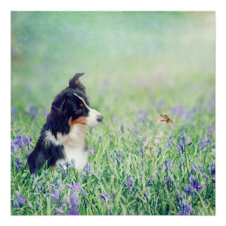 The Collie and the Hummingbird Poster