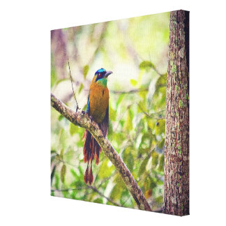 The Coloured Costa Rican Motmot on Canvas