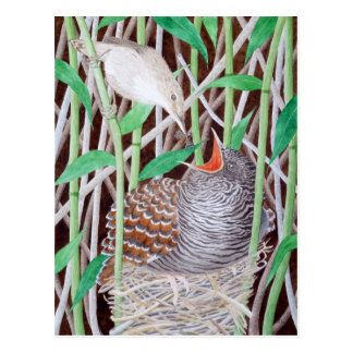The Common Cuckoo Postcard