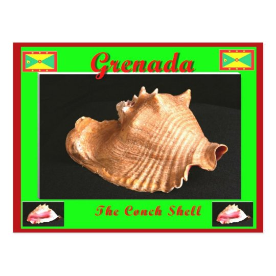 The Conch Shell Postcard