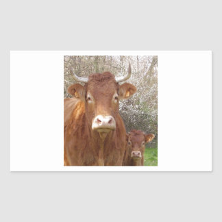 The cow and his calf - the cow and its calf sticker