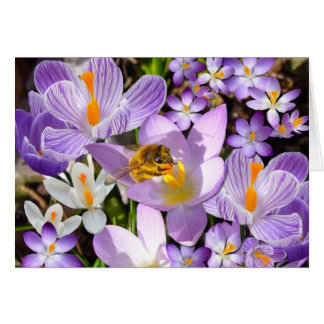 The Crocus Taster Card