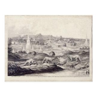 The Crystal Palace Postcard