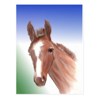 The curious foal postcard