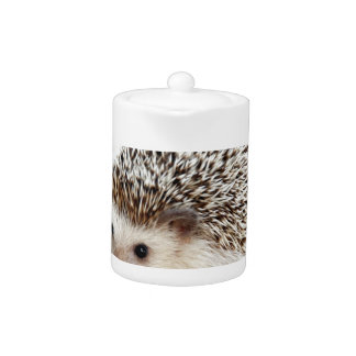 The Cute Baby Hedgehog