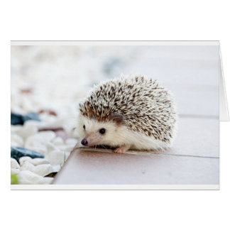 The Cute Baby Hedgehog Card