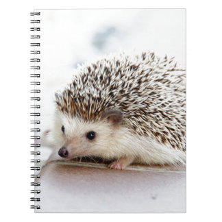 The Cute Baby Hedgehog Notebook