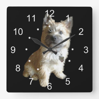 The Cutest Cairn Terrier Ever!  Cuter than Toto! Square Wall Clock