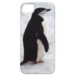 The Cutest Penguin, Ever iPhone 5 Case