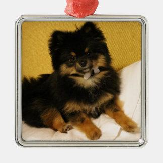 The cutest Pomeranian Metal Ornament
