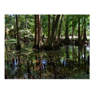 The Cypress Trees 2 Postcard