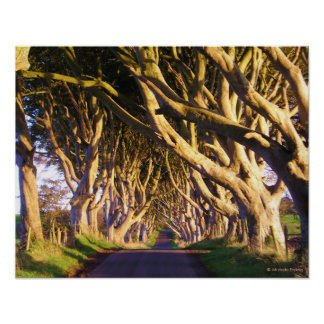 The Dark Hedges Print