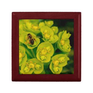 The Desert Gopher Plant Gift Box