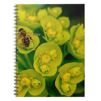 The Desert Gopher Plant Note Books