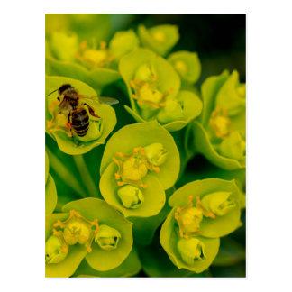 The Desert Gopher Plant Postcard