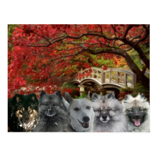 The Dogs of the Inn Postcard