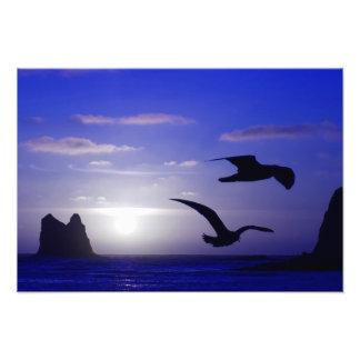 """the double bird blues"" photo"
