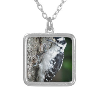 The Downey Woodpecker Silver Plated Necklace