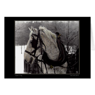 The Draft Horse Greeting Card