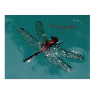 The Dragonfly Postcard