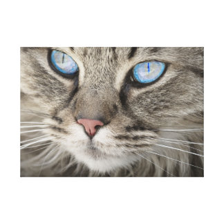 The Dramatic Blue-Eyed Cat. Canvas Print