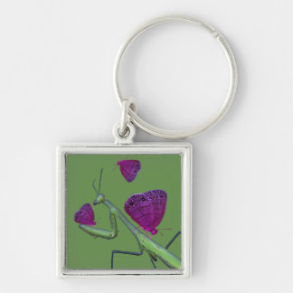 The Dreaming Mantis Keychain