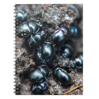 The dung beetles Anoplotrupes stercorosus Notebook