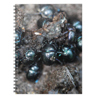 The dung beetles Anoplotrupes stercorosus Notebooks