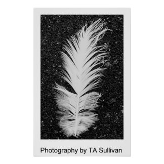 The Egret Feather  by TDGallery Poster