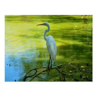 The Egret Postcard